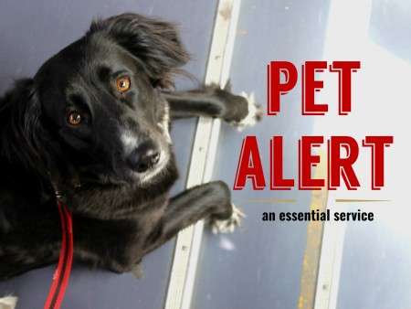 DISCOVER THE PET ALERT SERVICE - ONLY IN FRENCH