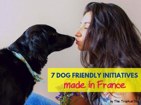 dog-friendly-initiatives