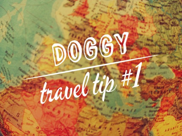 travel with a dog