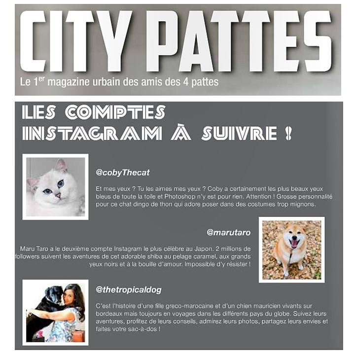 Citypattes
