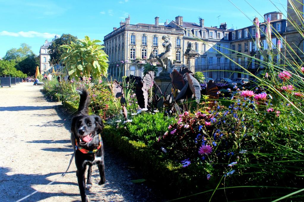Bordeaux dog-friendly centre-ville
