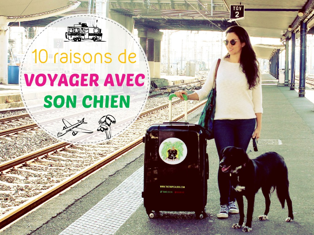 voyager avec son chien