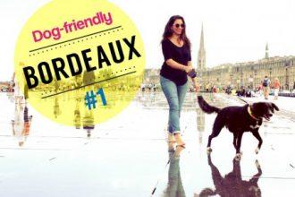 Bordeaux dog-friendly