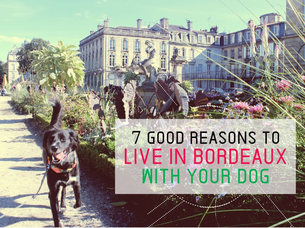 Bordeaux with a dog