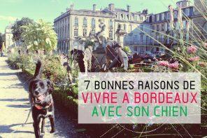 Bordeaux avec son chien