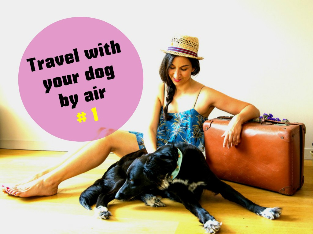 Travel with your dog by air