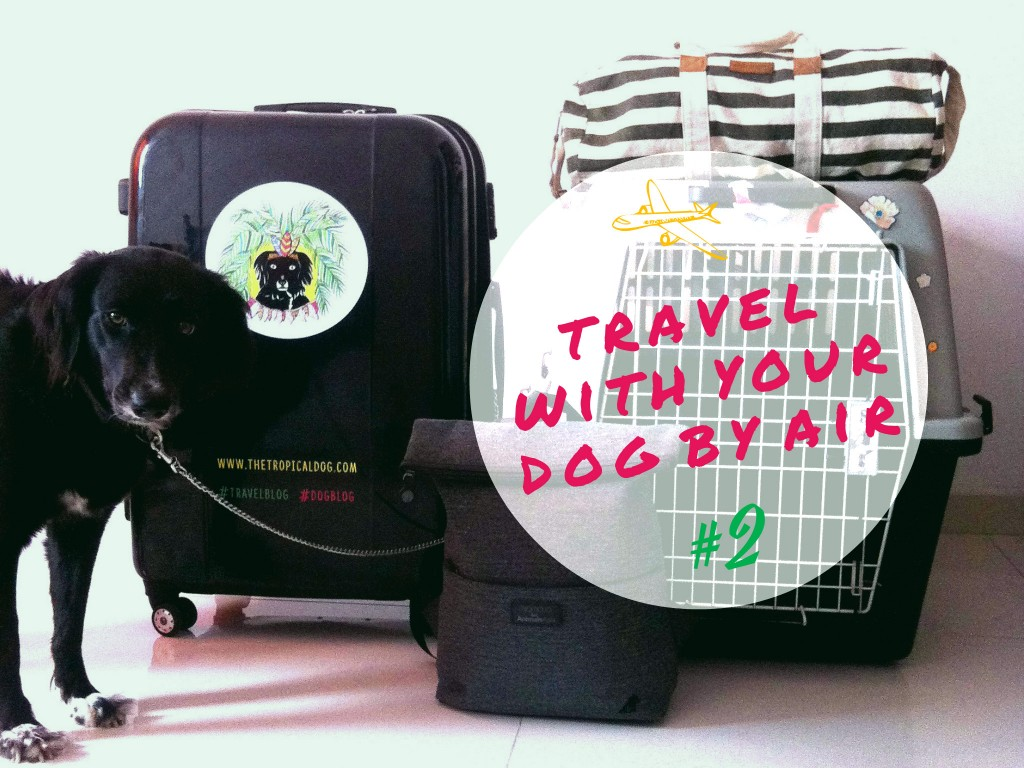 Travel with a dog by air