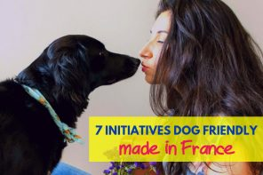 initiatives dog friendly