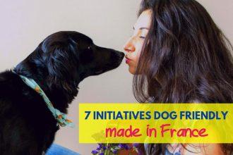 initiatives dog friendly
