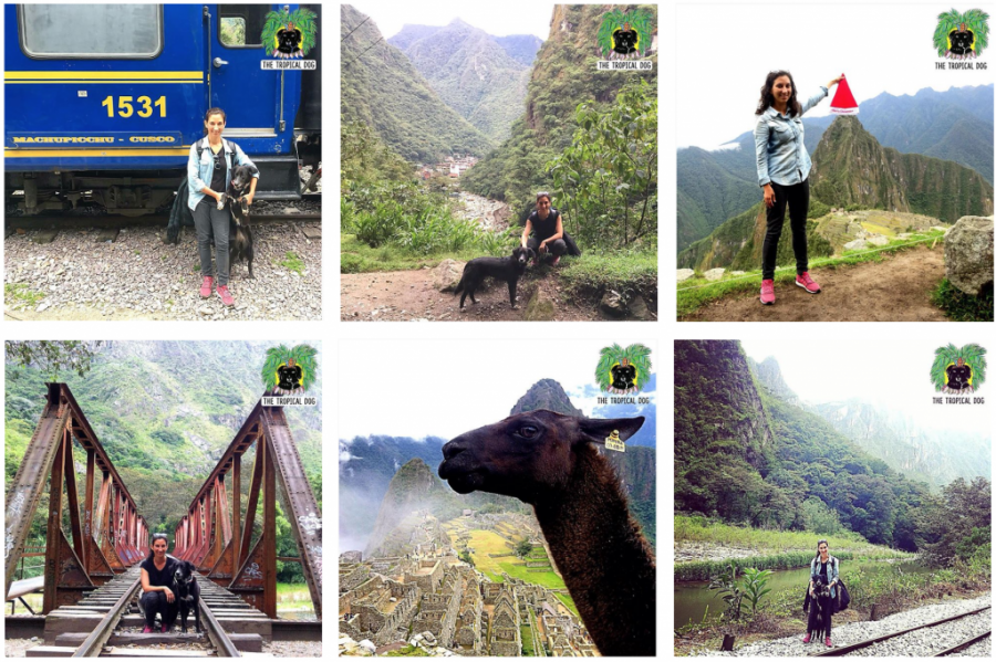 Traveling with a dog in Peru 4