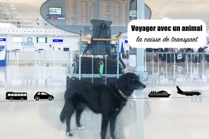 voyager avec un animal