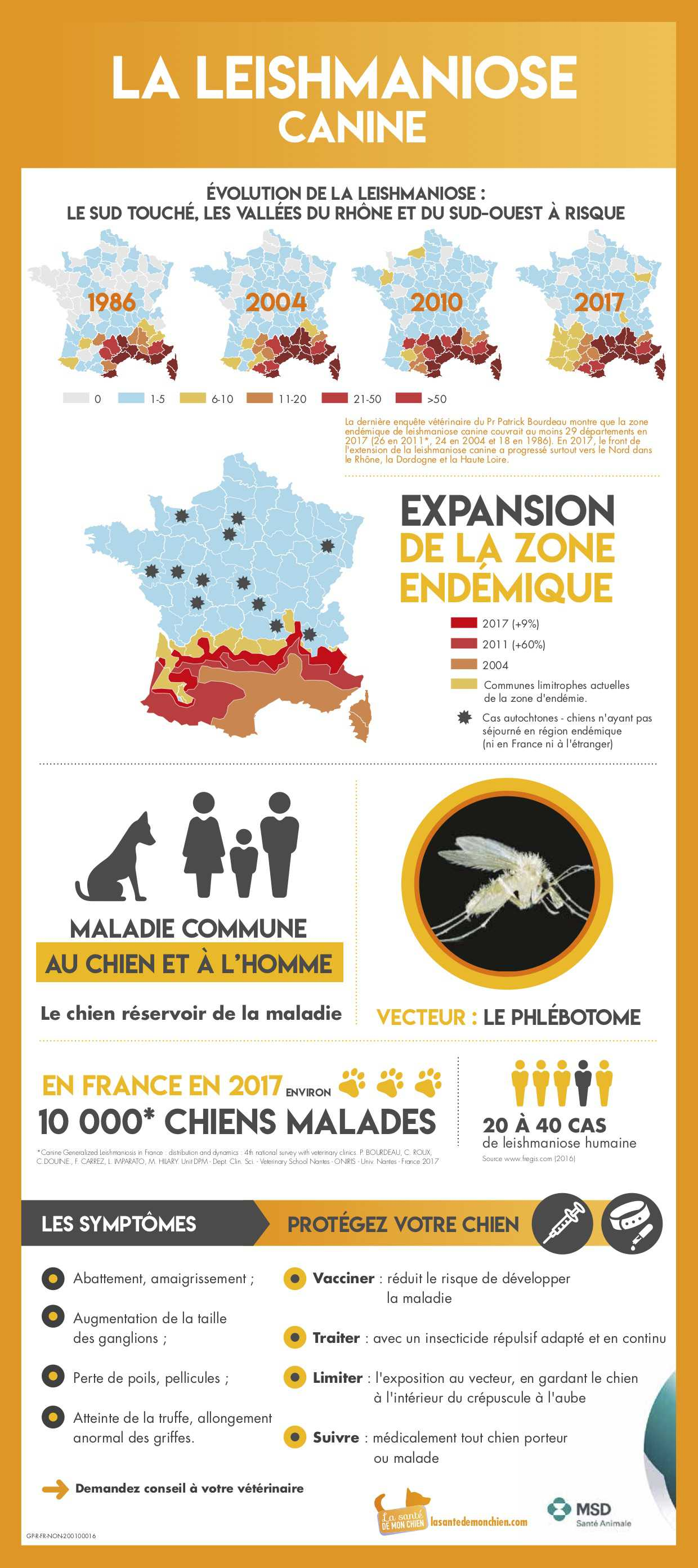 leishmaniose canine infographie