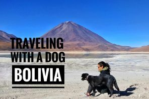 traveling with a dog in Bolivia