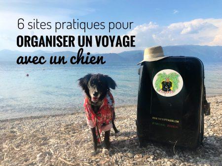 Organiser un voyage avec un chien