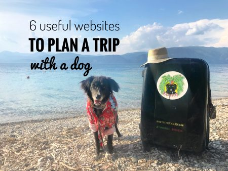 Plan a trip with a dog