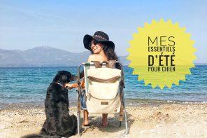 essentiels d'été pour chien