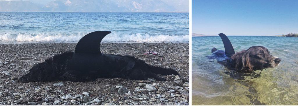 Labrashark shark fin for dogs