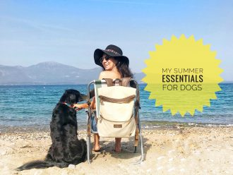 Summer essentials for dogs